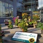 Altensteiger Blumenmarkt 2017 Blumen-Luz (2)