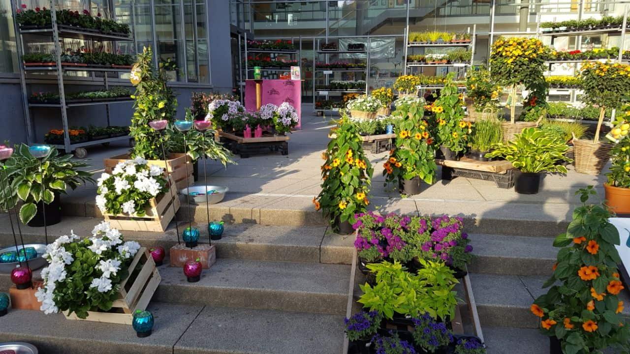 Altensteiger Blumenmarkt 2017 Blumen-Luz (3)