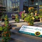 Altensteiger Blumenmarkt 2017 Blumen-Luz (4)