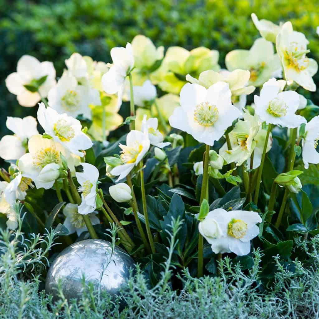 Advent 2017 Blumen-Luz Weihnachten Weihnachtszeit Deko 01