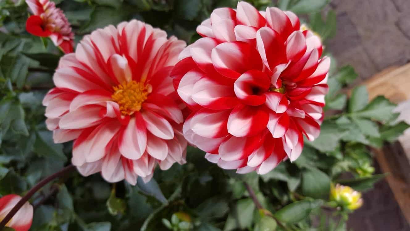 SOMMER PUR Blumen-Luz Altensteig 2018 (8)