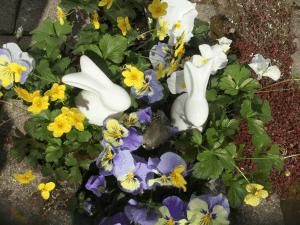 Blumen-Luz Altensteig Ostern 2020