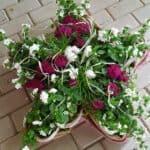 Blumen-Luz Altensteig Trauerschmuck 2020