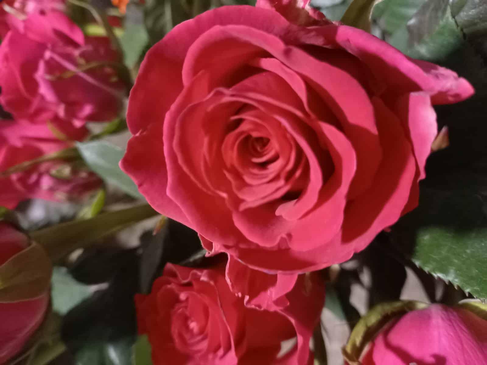 Valentinstag 2021 Blumen-Luz Altensteig Corona